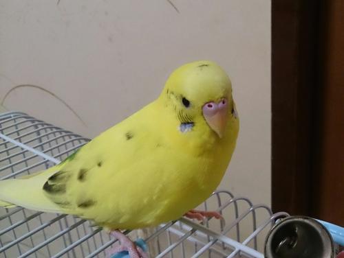 小鳥279