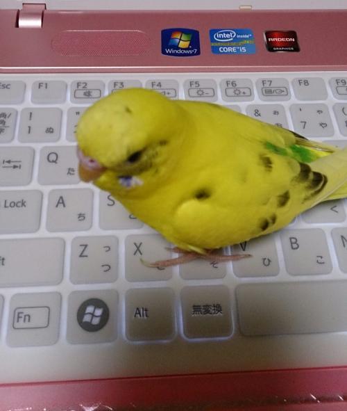 小鳥281