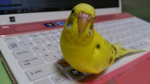 小鳥282
