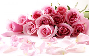 Valentines-Day-Roses.jpg