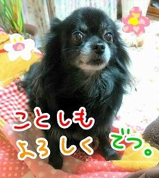 2016-01-02_21_41545_201701030109518ac.jpg