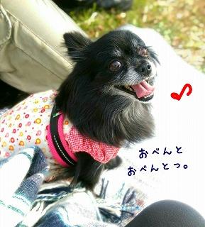 2016-11-27_160405.jpg