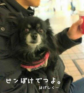 2016-12-31_000018.jpg