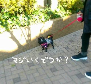 2017-02-08_21_67557.jpg