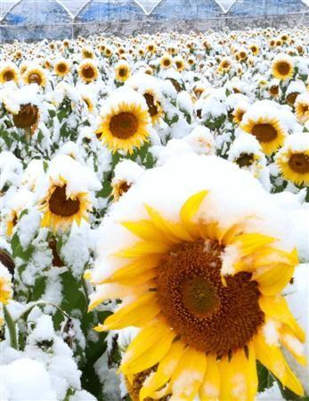 ①★博多駅前ウンコ池埋め立て地沈下!☆2016年11月24日観測史上初雪!