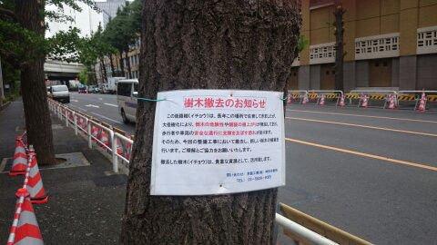 ②基地害ウンコババア小池が千代田区の街路樹を全部ぶった切りまーす!