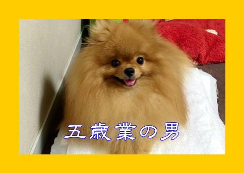 blog20170101-2b.jpg
