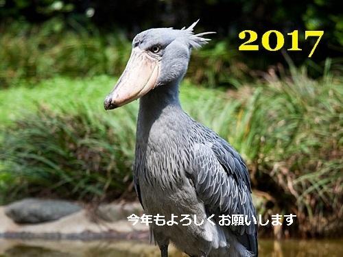 shoebill_img01-l_201701011255478a1.jpg
