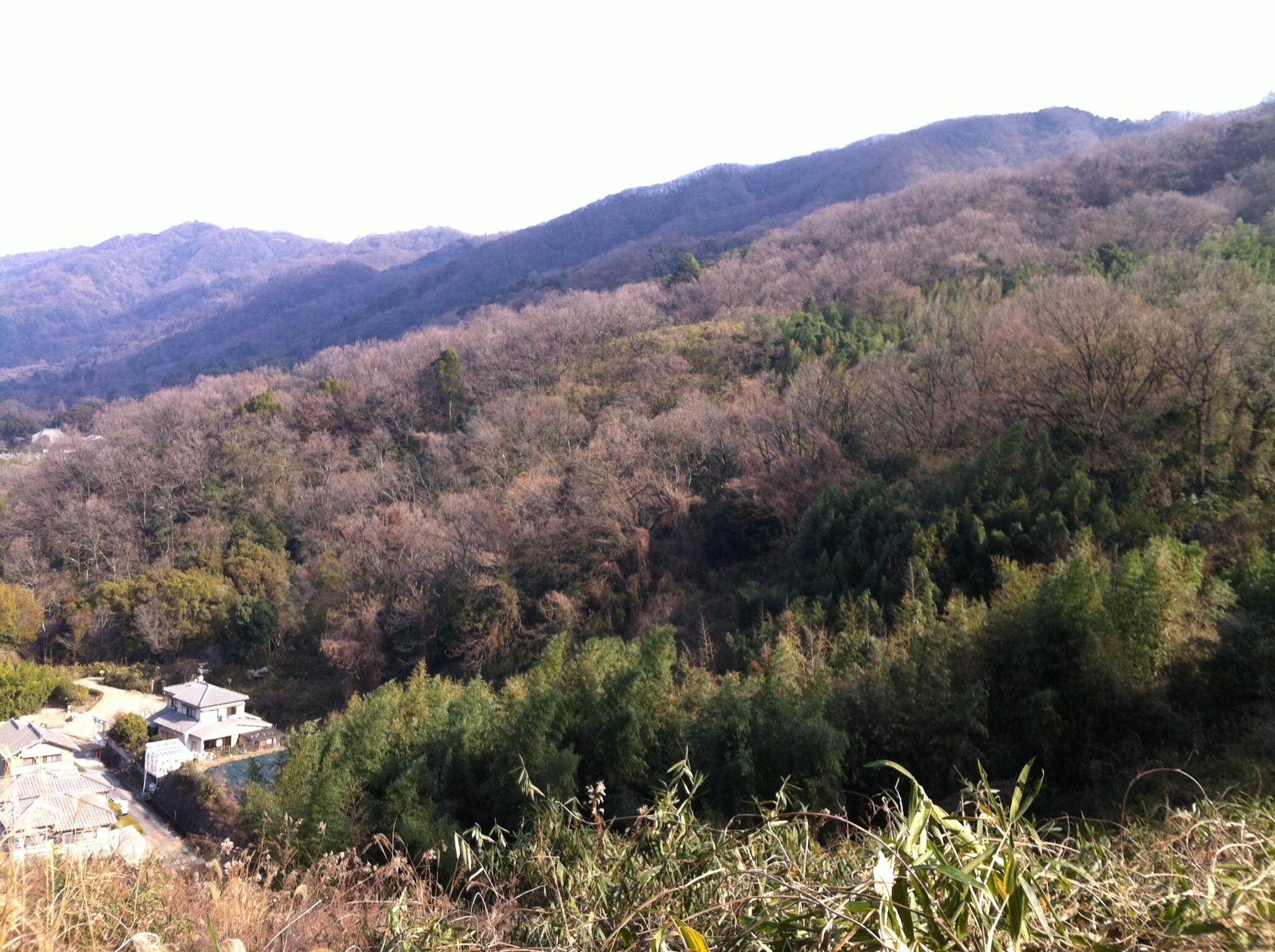 裏山から自宅