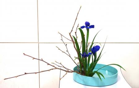DSC00740-盛花161212