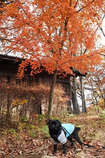 紅葉とうるま