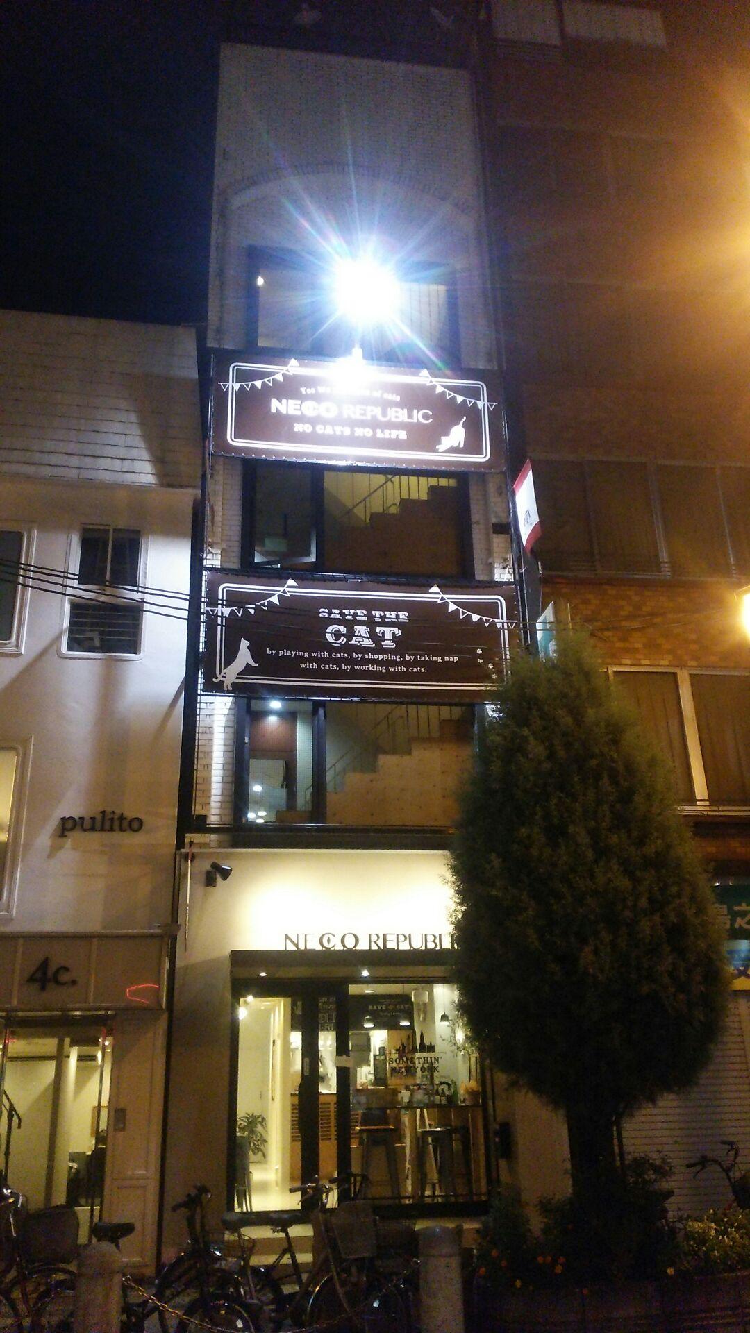 エミ猫カフェ①