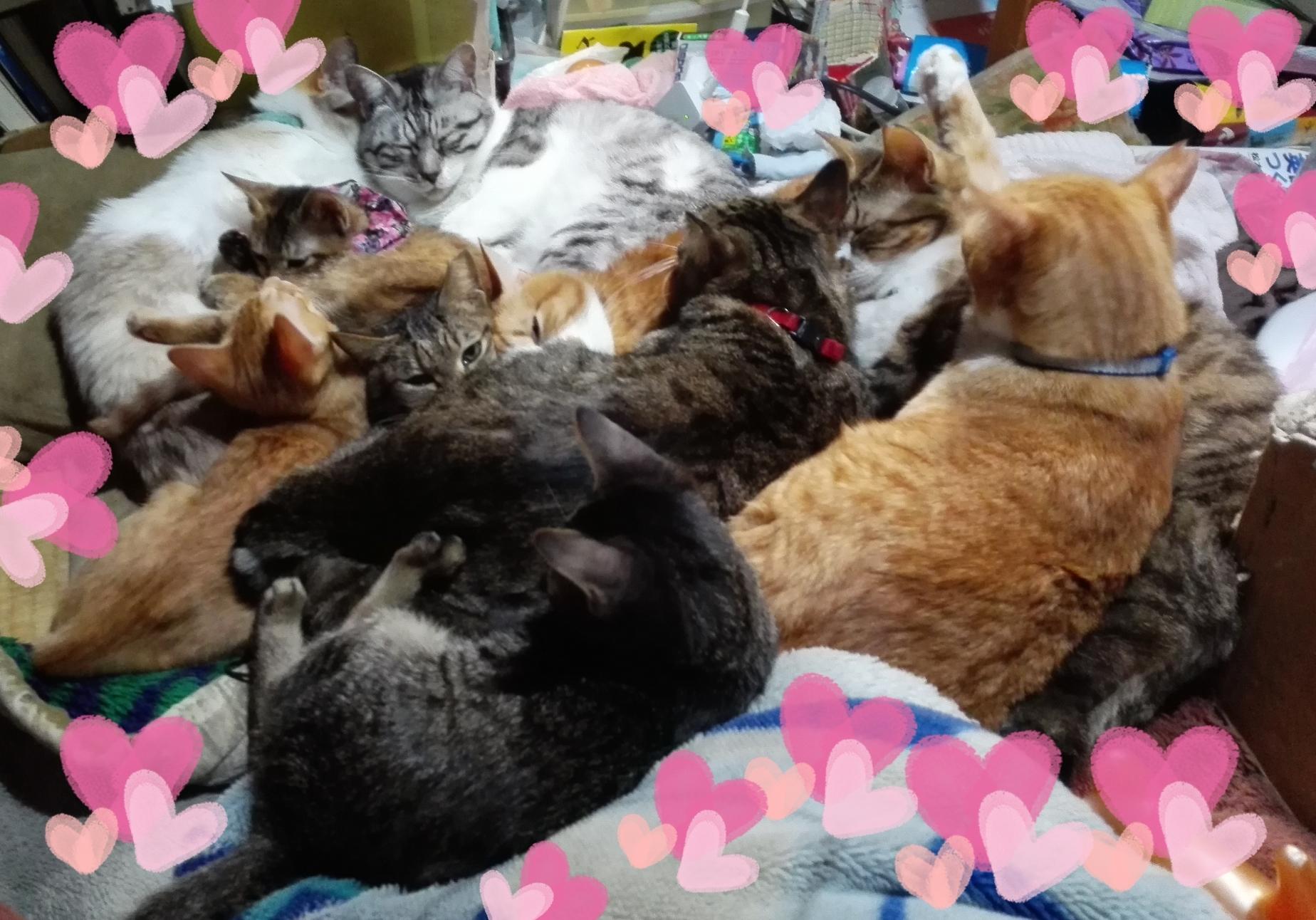 アグネス家猫2016