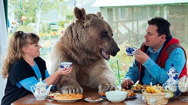 ロシアくま1食事も一緒