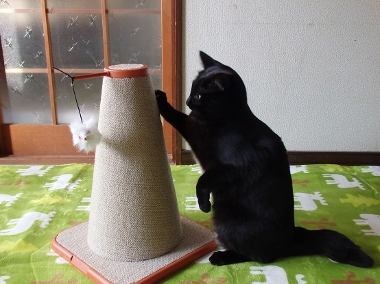 猫ちゃんママ10