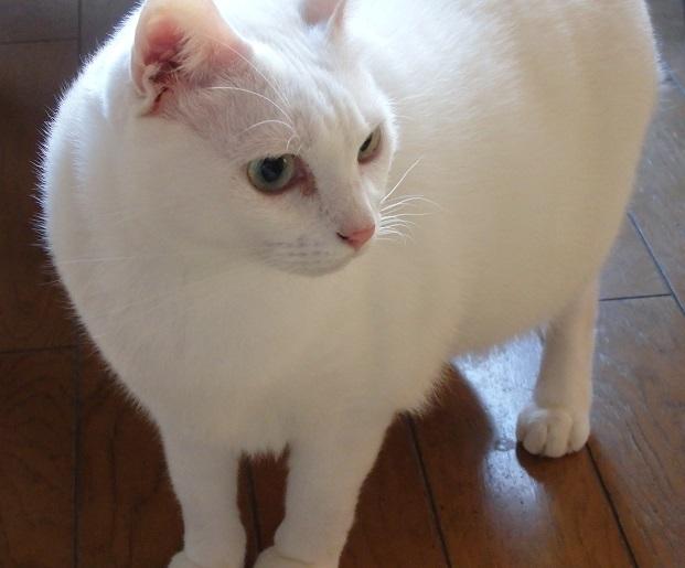 猫ちゃんママ12