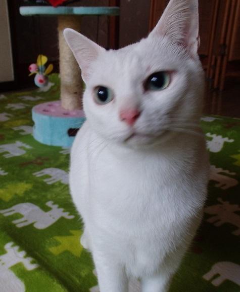 猫ちゃんママ16