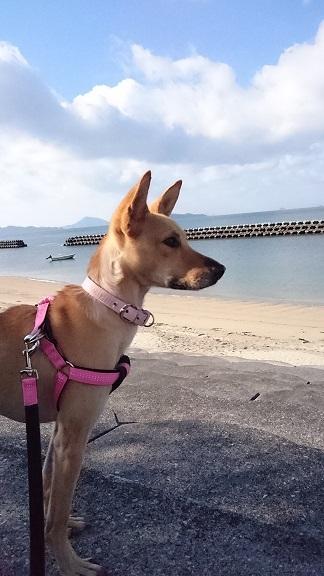 海を眺めるのが大好きなマリリン