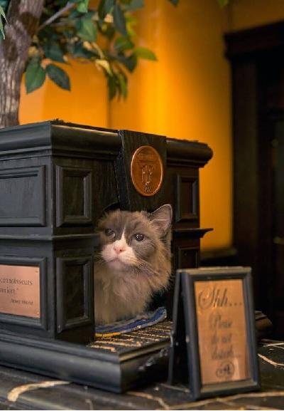ニューヨークの老舗高級ホテル、アルゴンキン・ホテルには、「マチルダ3世」という名物猫がいます。このホテルには1930年代から常に名物猫がいて、男の子の猫ならハムレット、女の子の猫ならマチルダと名付けられる伝統があるとか。