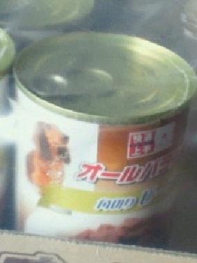 東温市犬1