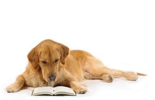読書介助犬3