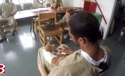 受刑者と猫