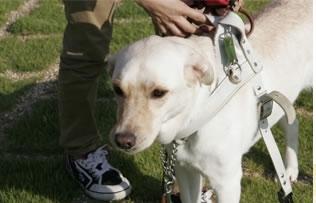 盲導犬パピープログラム①