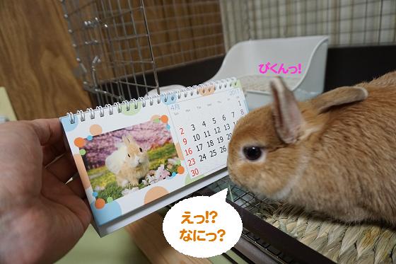 ぴょん子161217_00