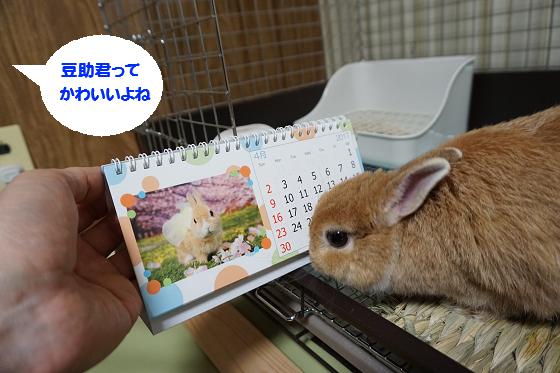 ぴょん子161217_01