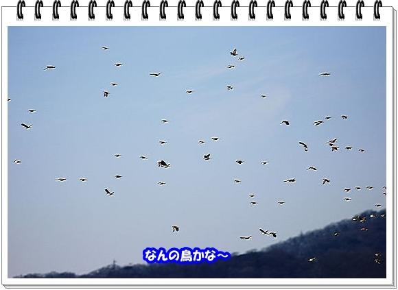 2833ブログNo1