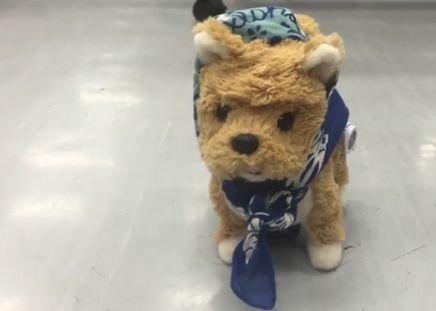 20161207a_Pi Dog Kotaro_01