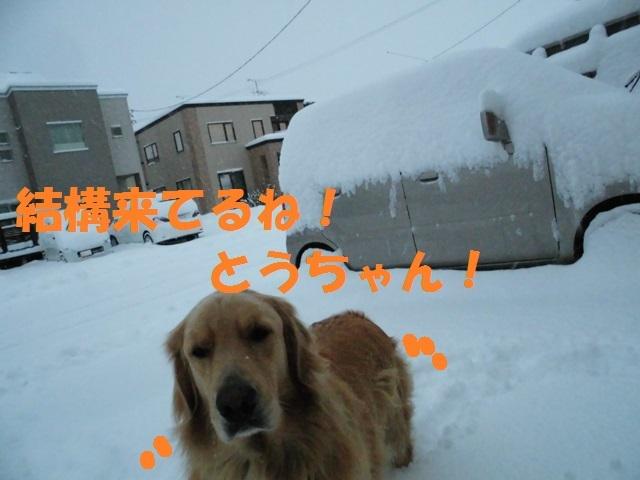 CIMG3699_P.jpg