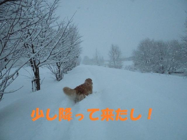 CIMG3704_P.jpg