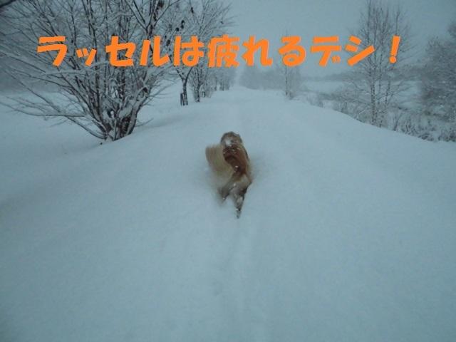 CIMG3705_P.jpg