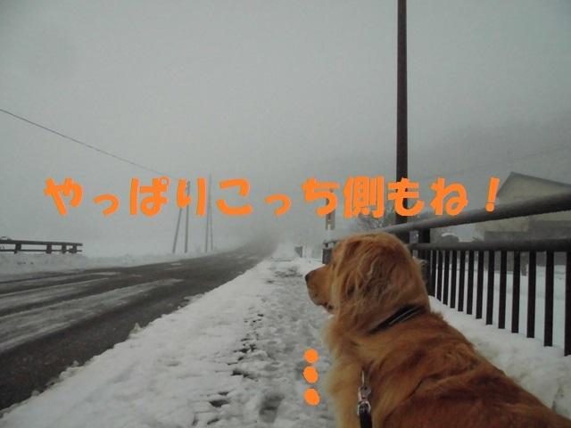 CIMG3732_P.jpg