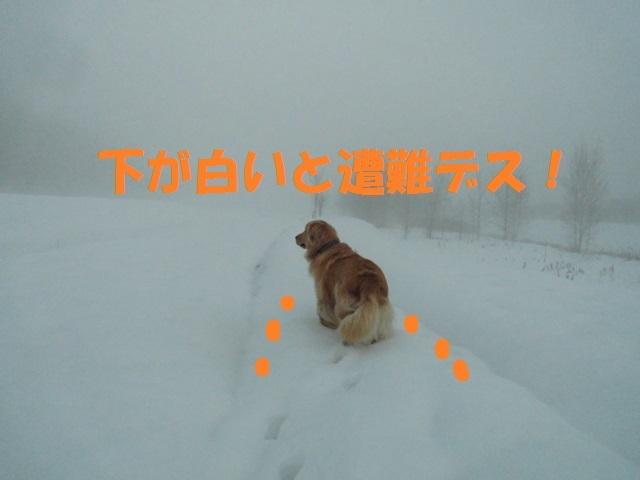 CIMG3733_P.jpg