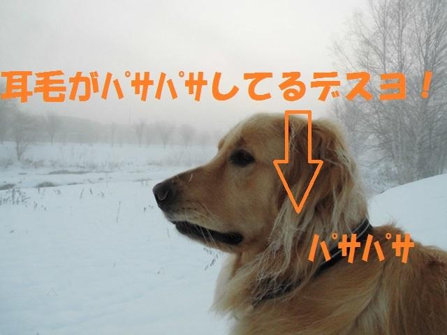 CIMG3738_P.jpg