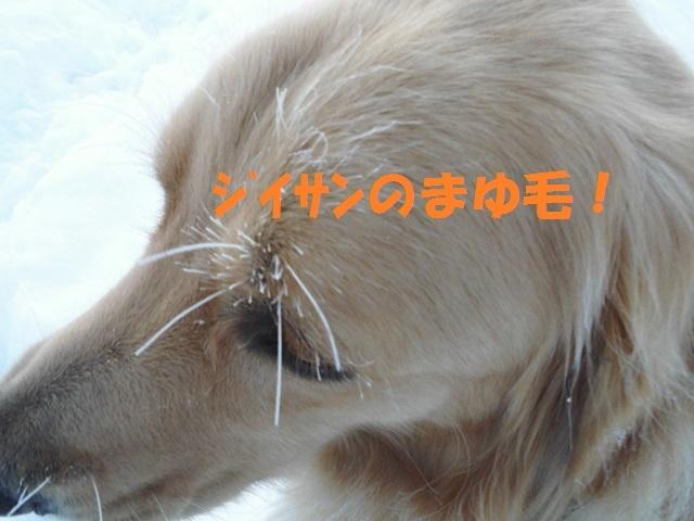 CIMG3740_P.jpg