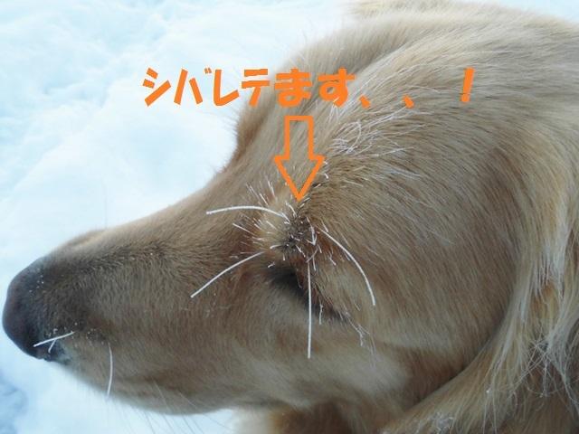 CIMG3741_P.jpg