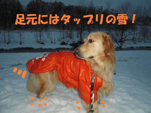 CIMG3748_P.jpg