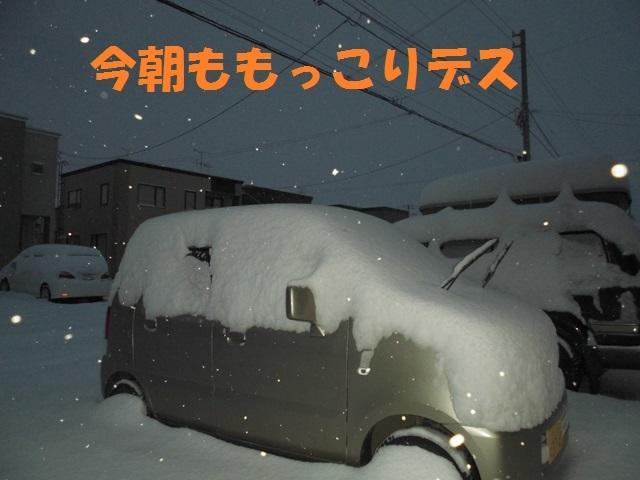 CIMG3750_P.jpg