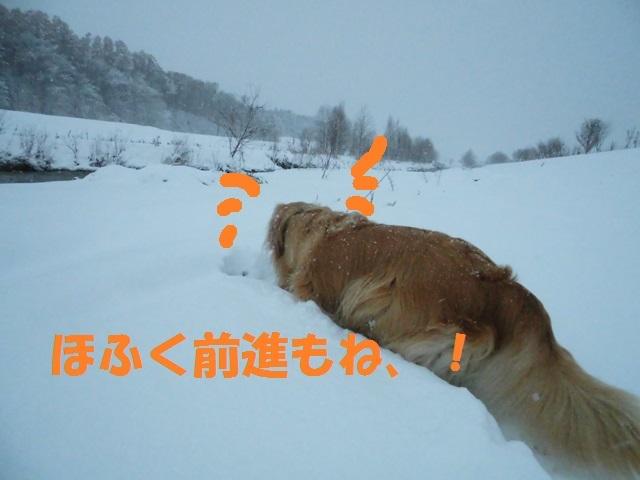 CIMG3759_P.jpg