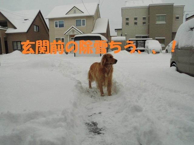 CIMG3760_P.jpg