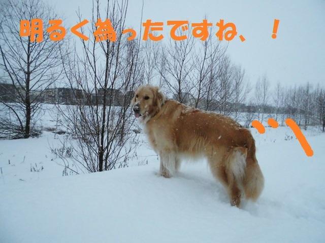 CIMG3840_P.jpg