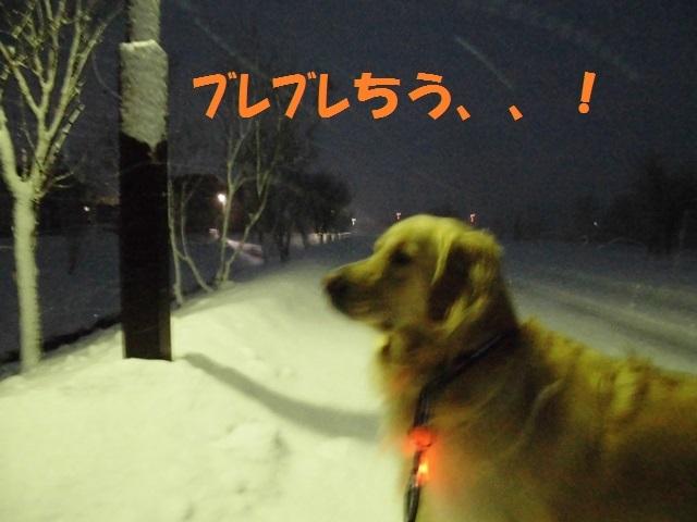 CIMG3894_P.jpg