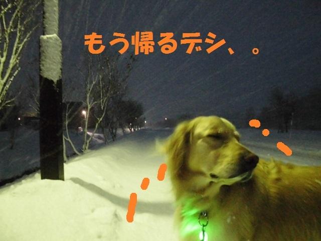 CIMG3895_P.jpg