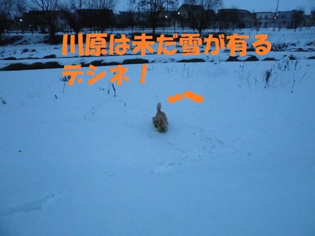 CIMG3913_P.jpg