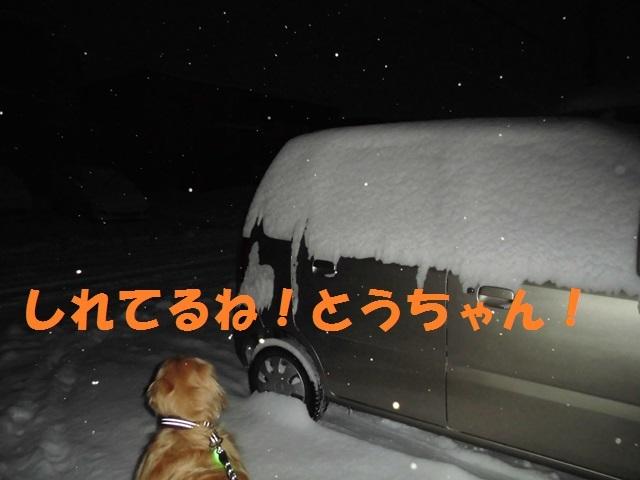 CIMG3925_P.jpg