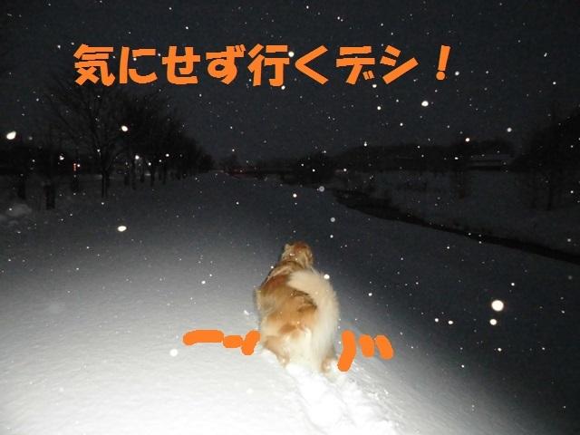 CIMG3932_P.jpg