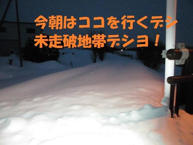 CIMG3941_P.jpg